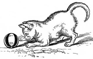 A Cat Chases a Mouse