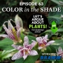 Artwork for Episode 63: Color in the Shade
