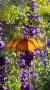 Artwork for Breathe into Spring - for Good Health