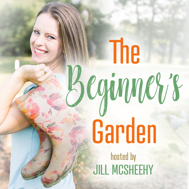 The Beginner's Garden show art