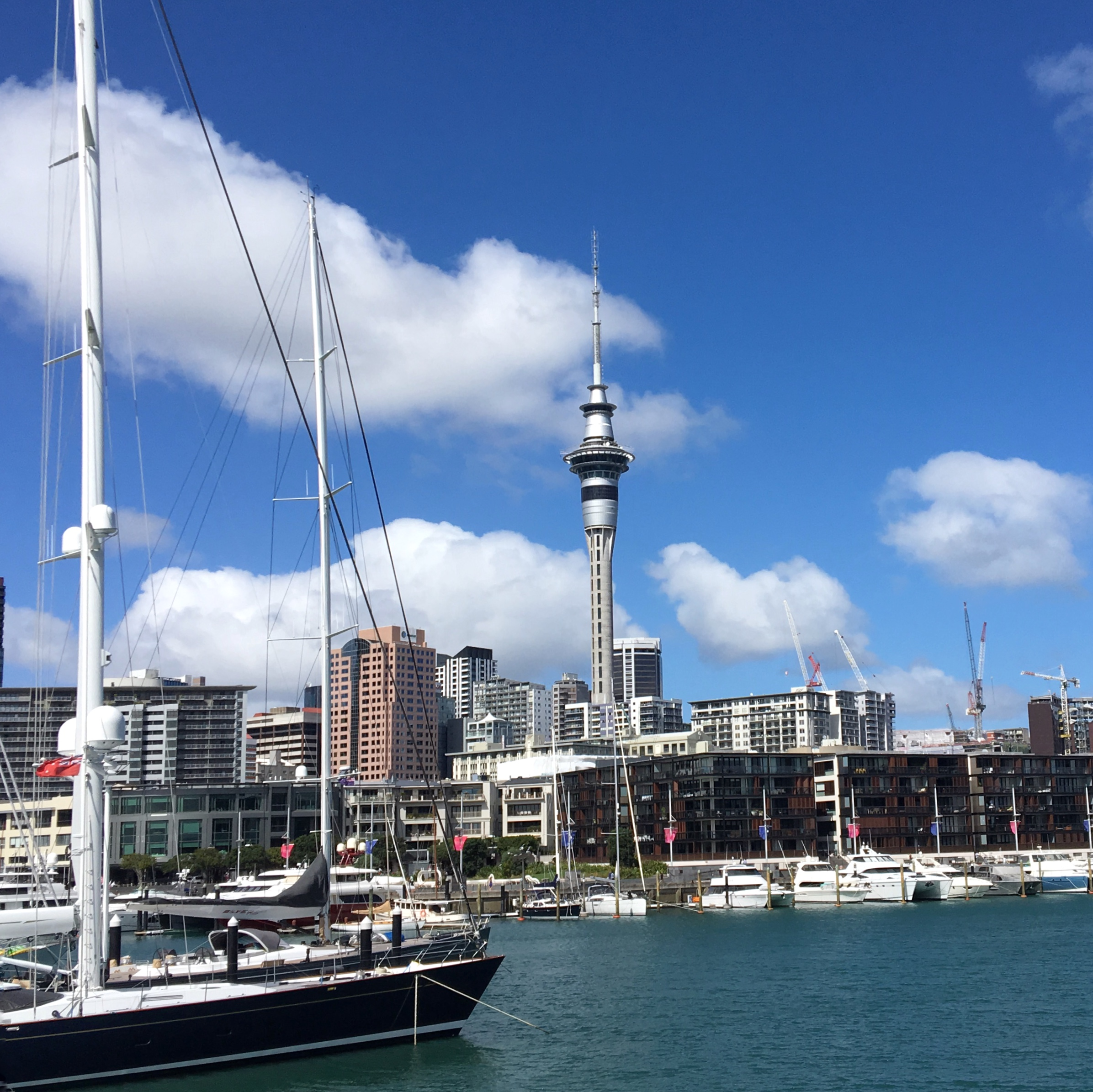 Artwork for Top 10 cheap things to do in Auckland