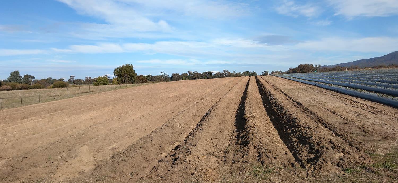 Growing an organic berry farm from scratch.