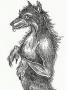 Artwork for Linda Godfrey- Monsters Among Us