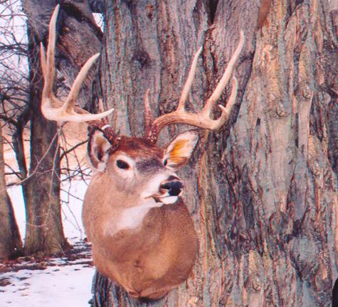 It's the beginning of deer season, not the end!! HFJ No. 118