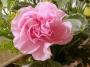 Artwork for Music Medley: Pink Carnation