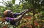 Artwork for African Women Need Better Jobs