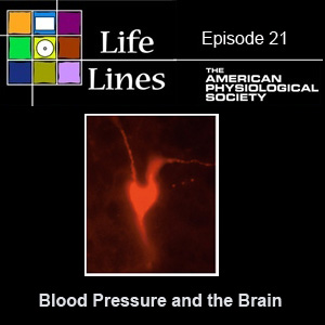 Episode 21: Blood Pressure and the Brain