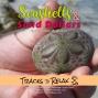Artwork for Sea Shells and Sand Dollars Sleep Meditation