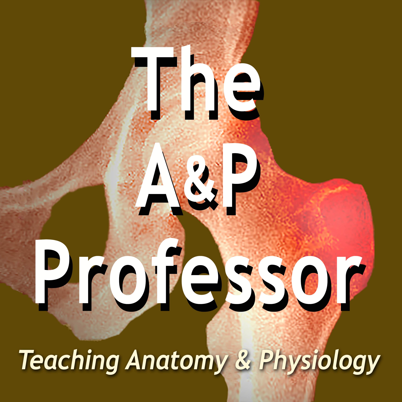 The A&P Professor show art