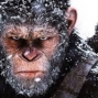 Artwork for Episode 5 - WAR FOR THE PLANET OF THE APES