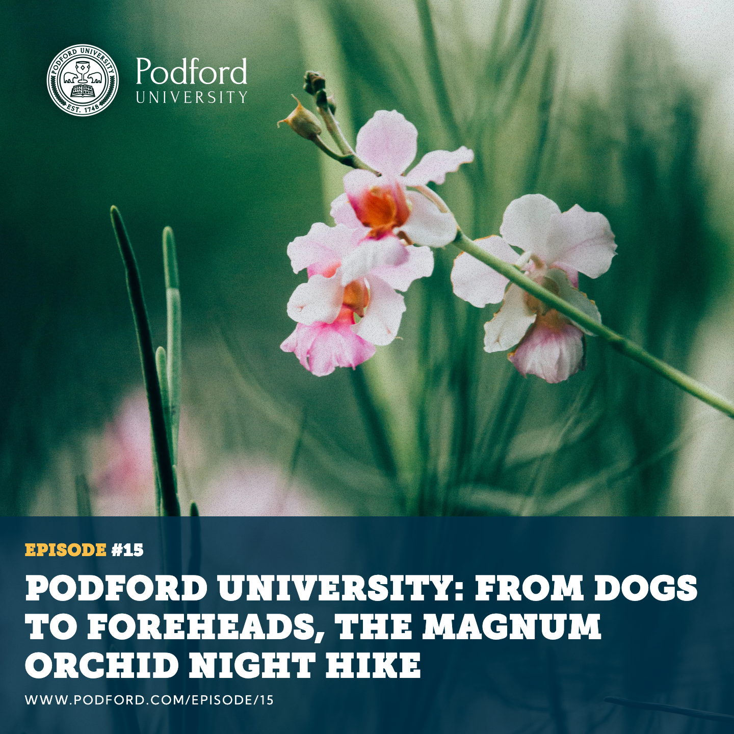 Podford University: From Dogs to Foreheads, The Magnum Orchid Night Hike