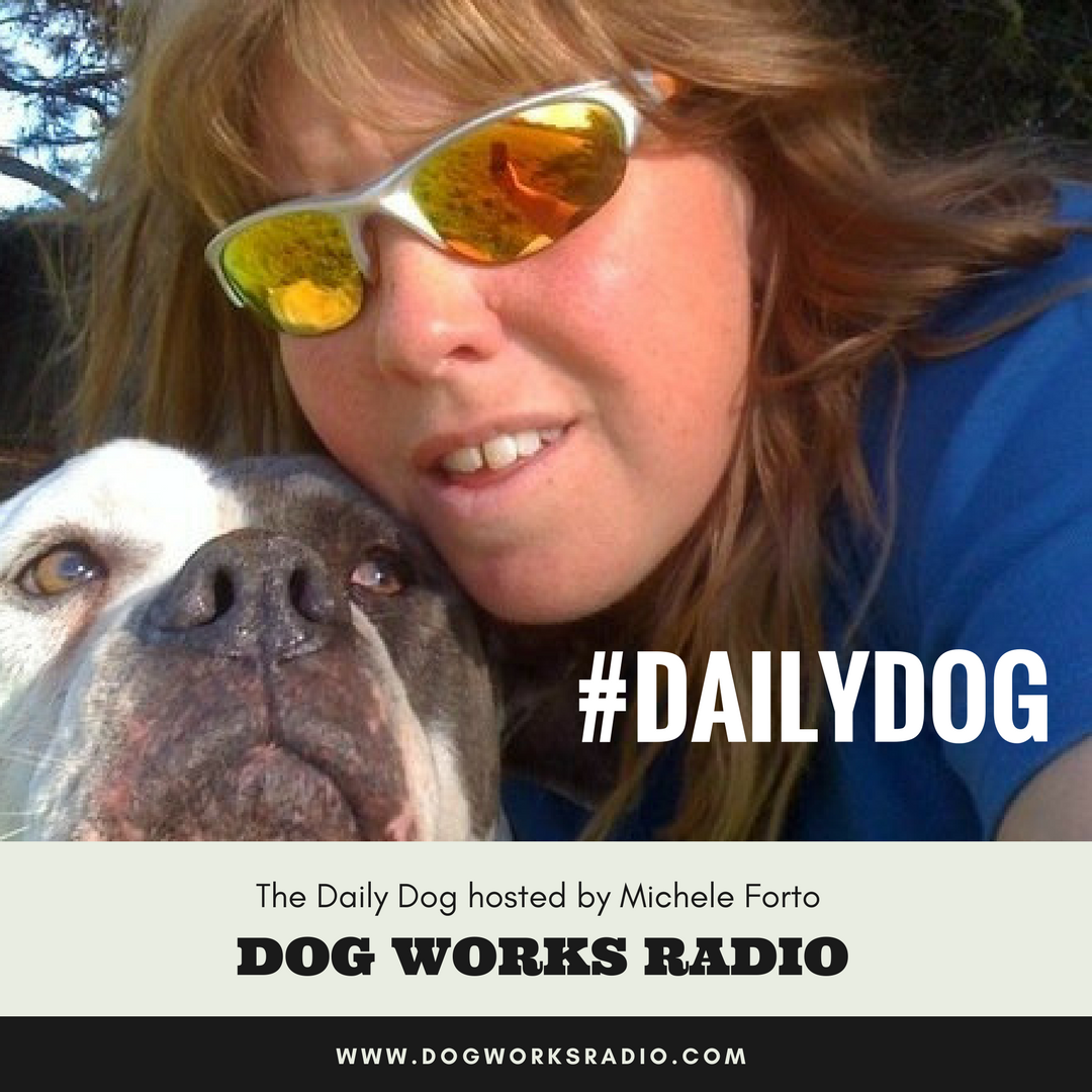 Artwork for The Daily Dog: Pet ID