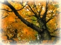Artwork for HYPNOBOBS 06 – Autumnal Ramblings