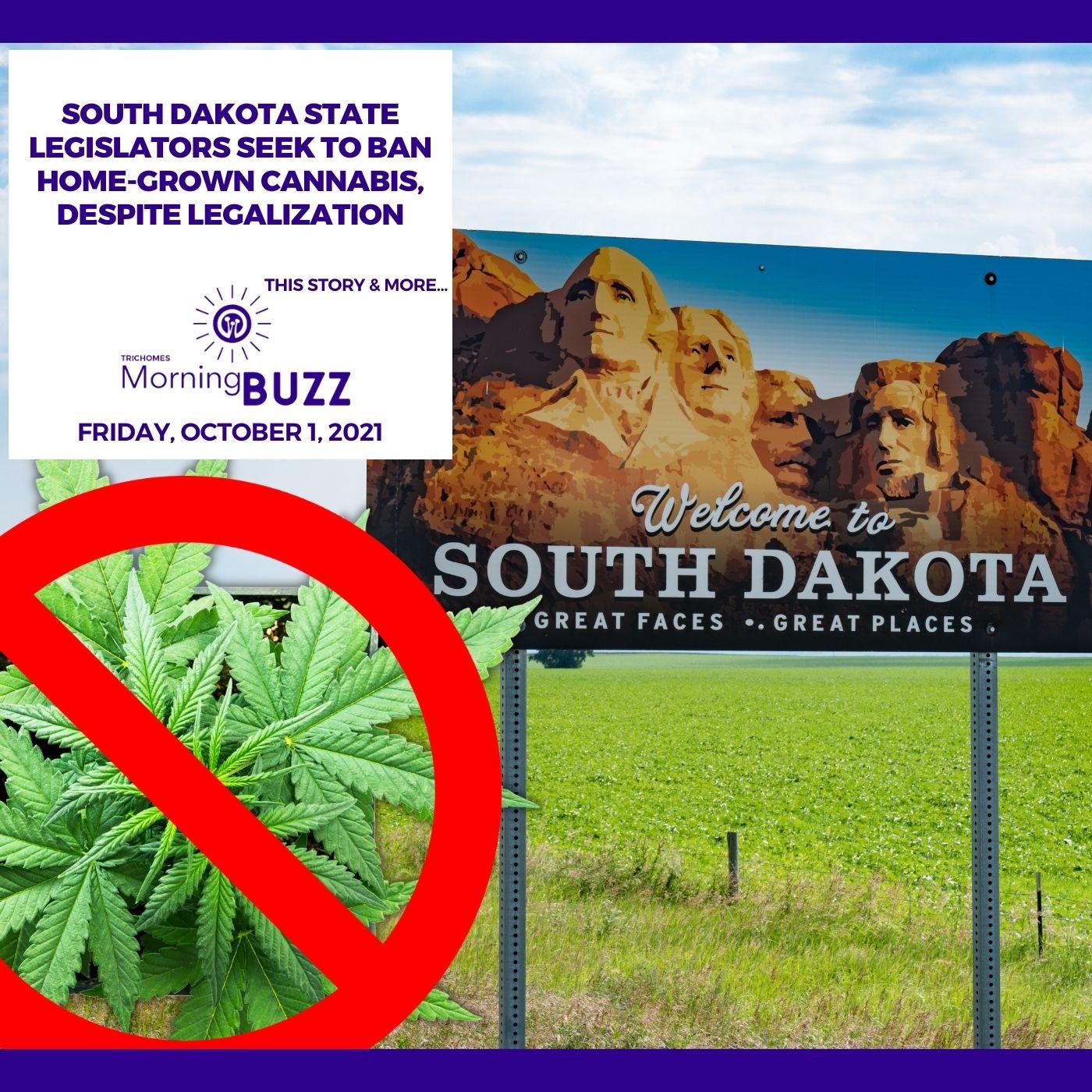 South Dakota State Legislators Seek To Ban Home-Grown Cannabis, Despite Legalization show art