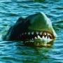 Artwork for Episode 70: Jaws 2