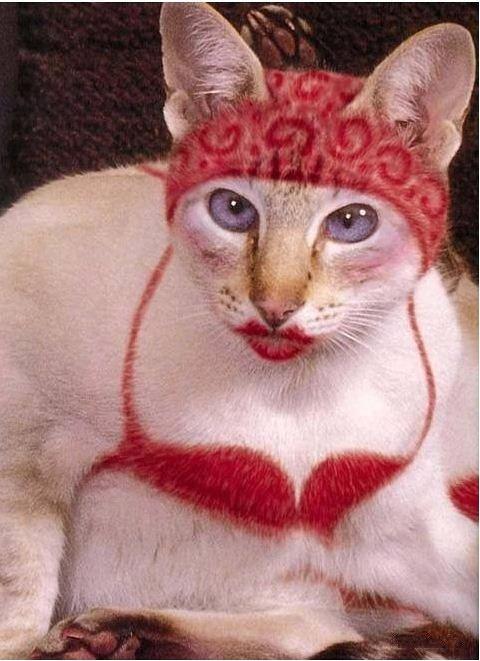 CST #300: Skanky Cat
