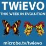 Artwork for TWiEVO 57: SARS-CoV-2 receptor binding evolution blooms