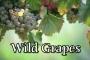 Artwork for FBP 473 - Wild Grapes