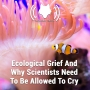 Artwork for Ecological Grief And Why Scientists Need To Be Allowed To Cry