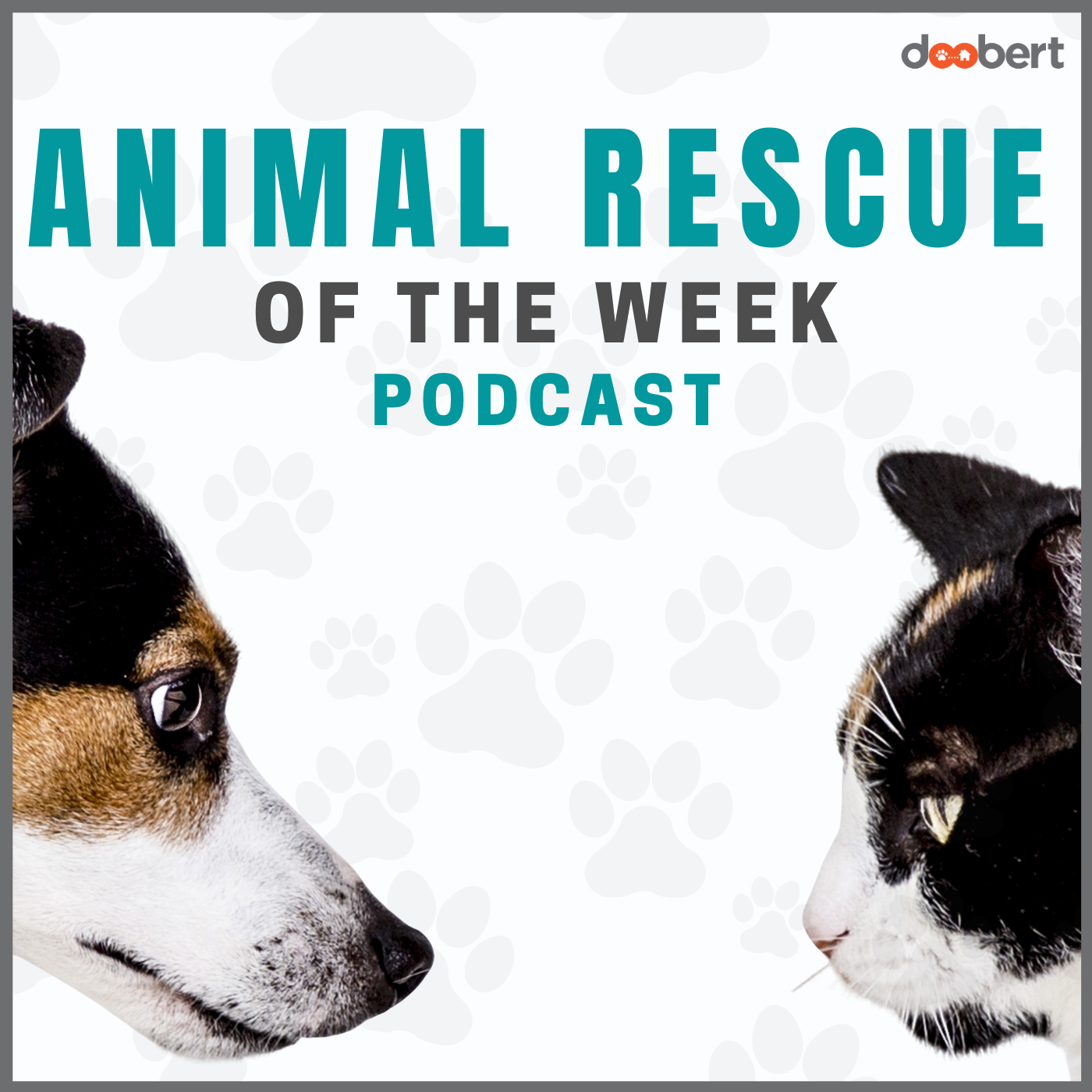 Animal Rescue of the week show art