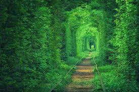 Wandering Room