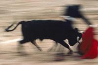 Corridas de toros y derechos de animales: Conversaciones Reales en Ingles