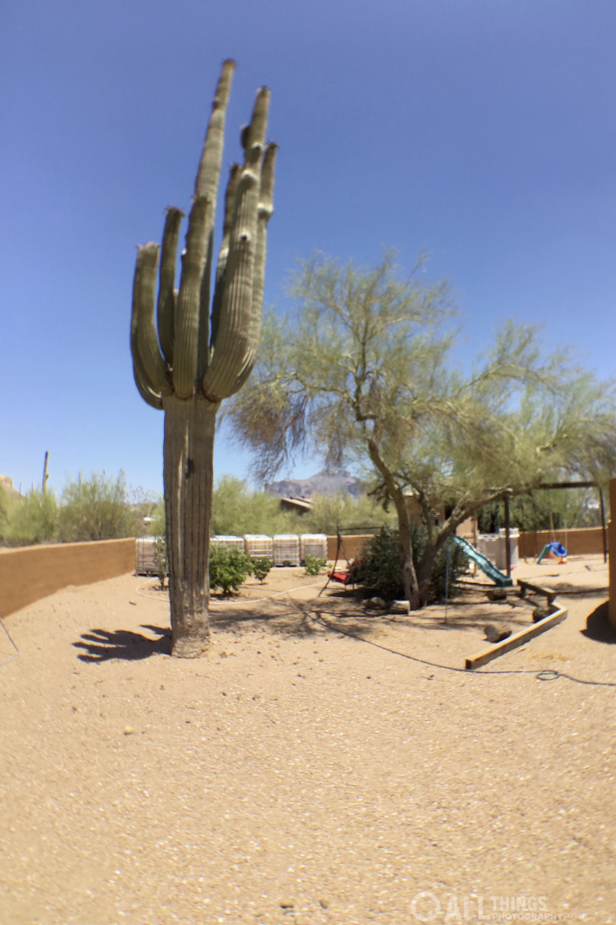 saguaro wide
