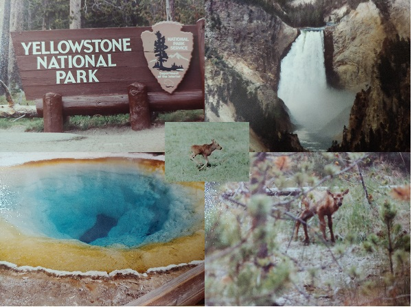 Ep. 327 - Yellowstone National Park