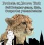 Artwork for #45 No patentarás genes, Siria, guepardos y neandertales
