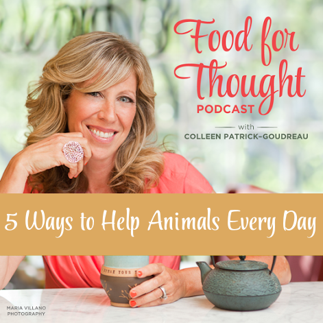 5 Ways We Can Help Animals in our Every Day Lives