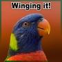 Artwork for S03 E17 - Winging It!