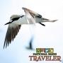 Artwork for National Parks Traveler: Sooty Terns and National Park Guidebooks