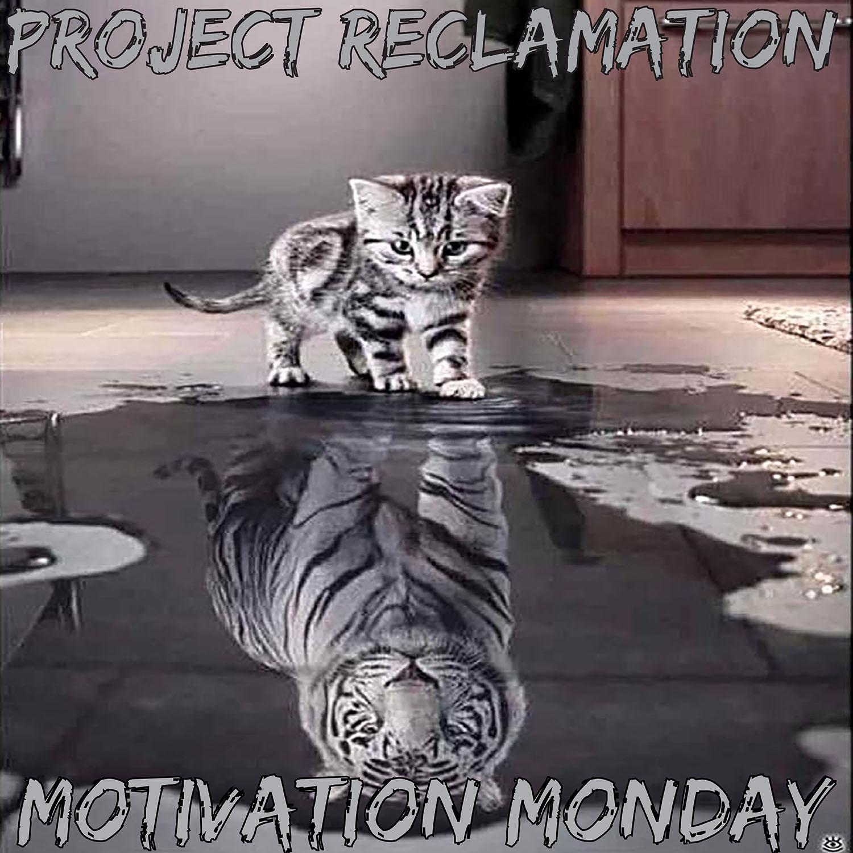 Artwork for Motivation Monday: Volume 8