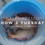 Artwork for HOW 2 TUESDAY #49 - How To Make The Sand-ball Chum