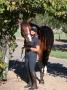 Artwork for 212: Amanda Hocking LC - Every Horse Teaches You Something