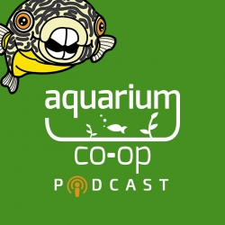 Aquarium Co-Op Podcast: How to Raise and Feed Baby Fish [Live Stream]