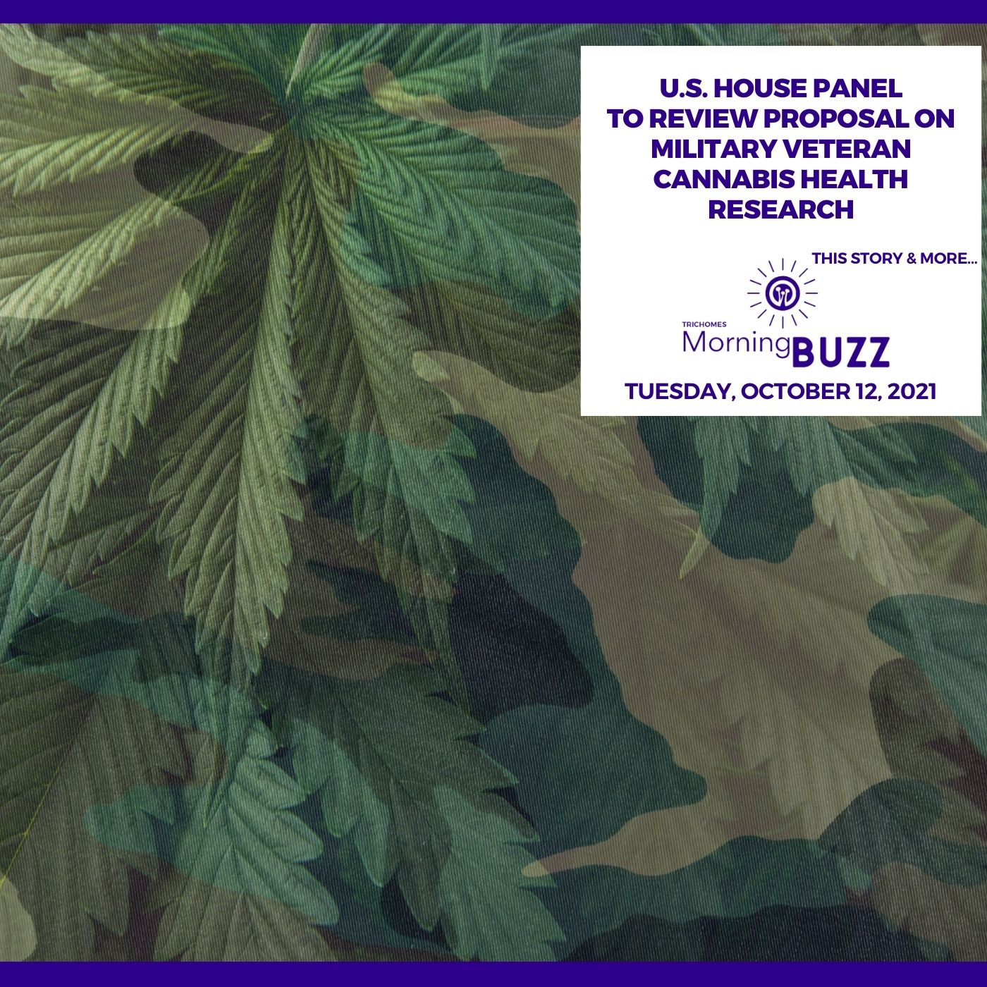 U.S. House Panel To Review Proposal On Military Veteran Cannabis Health Research show art