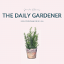 Artwork for January 17, 2020 The Conifer Comeback, Best Plants to Paint for Beginners,  Leonhart Fuchs, Gaspard Bauhin, John Ray, Peter Henderson, The Herb Lover's Spa Book by Sue Goetz, Hanging Glass Wall Planters, and David Wheeler's Hortus
