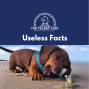 Artwork for Useless Facts