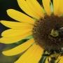 Artwork for Stink Bug Summer