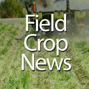 Field Crop News