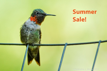 Super Pack Lesson Summer Sale 2015!