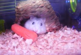 CST #113: Better Than A Dead Hamster