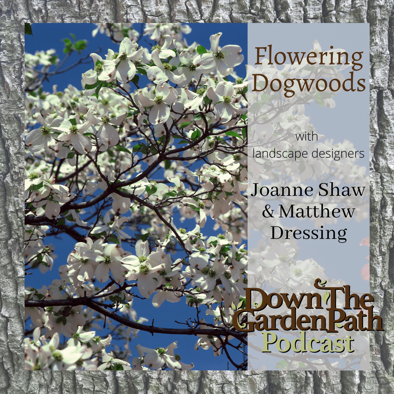 Artwork for Flowering Dogwoods