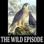 Artwork for Eleonora's Falcon : The Lady-Judge's Bird