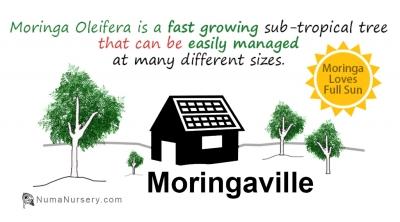 Moringaville show image