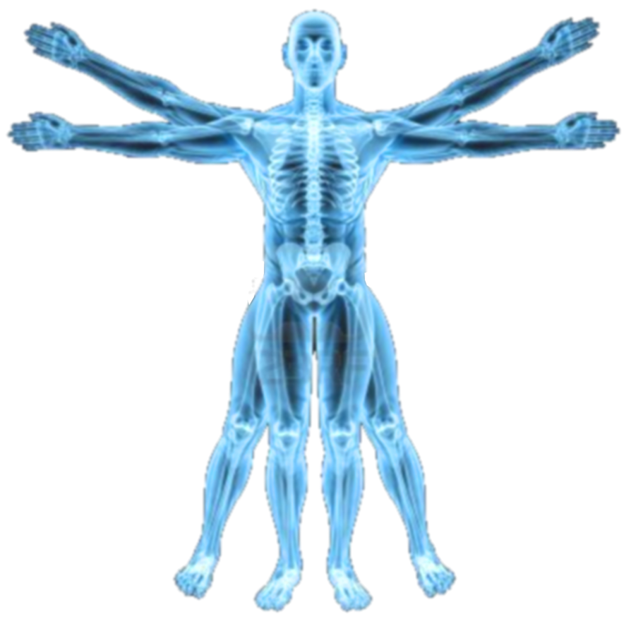 Episode #17 Does Body Symmetry Predict Your Health, Emotional, And Performance Potential?