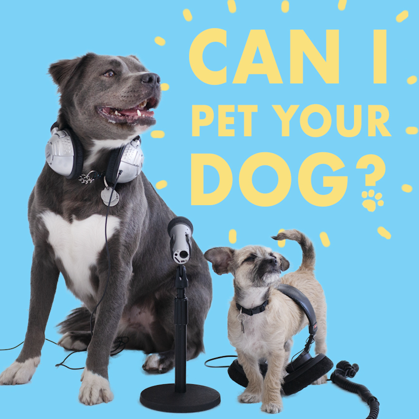 Can I Pet Your Dog? show art