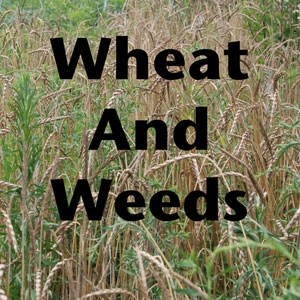 FBP 326 - Wheat And Weeds