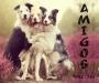 Artwork for NMC #126 - Amigos
